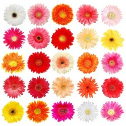 Single Stem Gerbera Mix Colors (FFTG1)