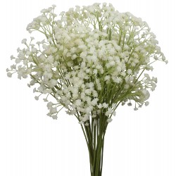 Gypsophila Baby's Breath (FFWGB1)